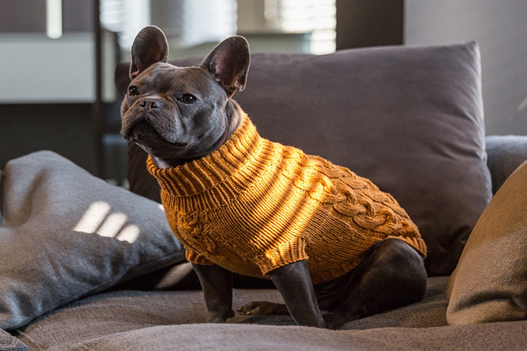 Knitted Dog Sweater