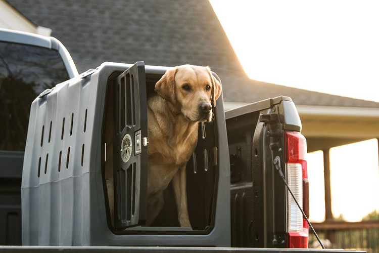 Top 10 Best Portable Dog Crates in 2021