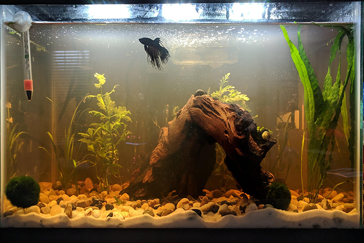 How To Deal With Smelly Water In Your Aquarium?