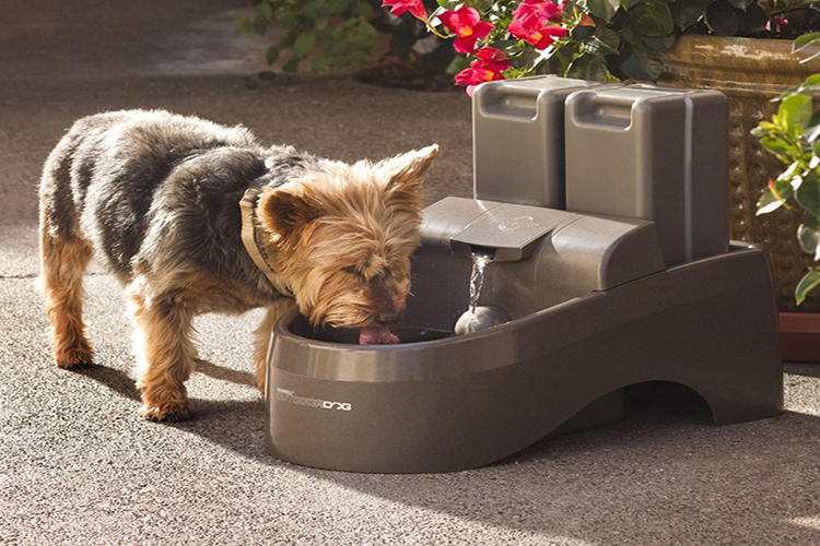 Best Automatic Dog Waterer