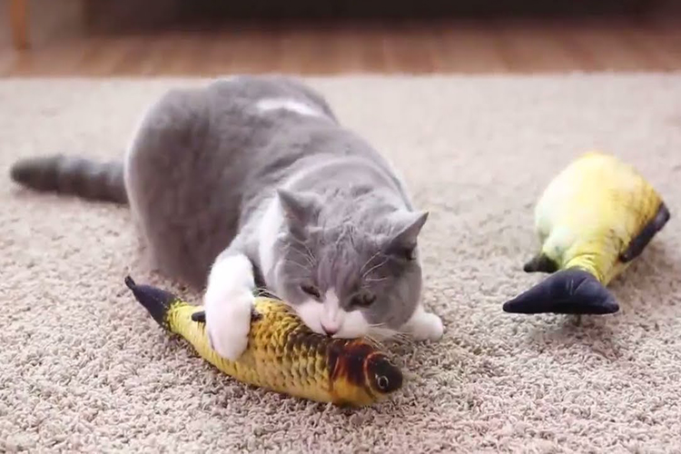 Top 10 Best Cat Fish Toy In 2020