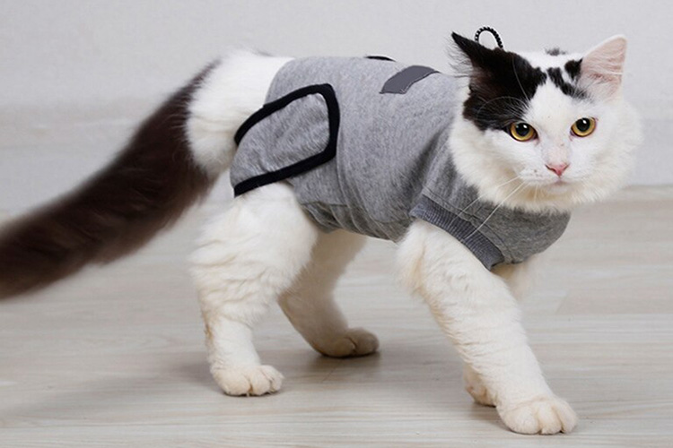 Onesie For Cats
