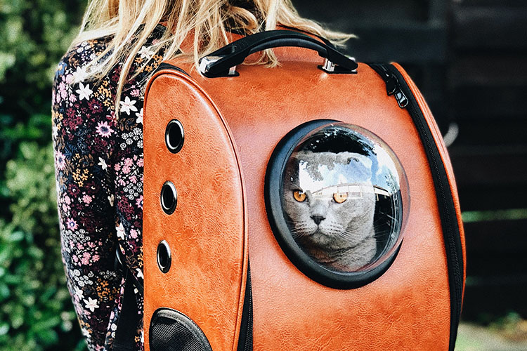 Cat Backpack with Window