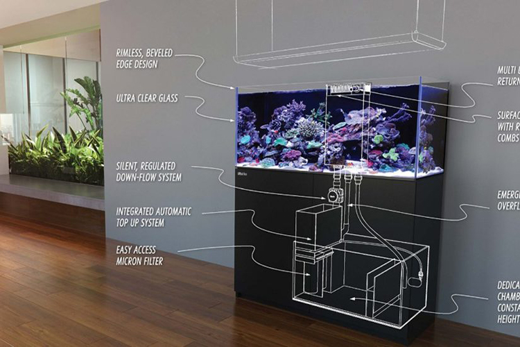 How To Set Up A New Fish Tank?