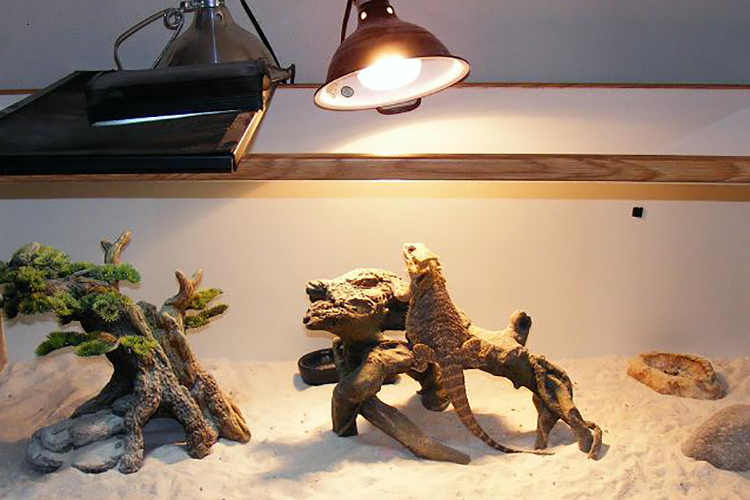 Reptile Heat Lamp