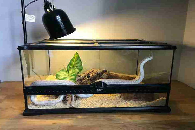Top 10 Best Snake Cages In 2021