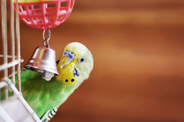 Tricks You Can Teach Your Pet Bird