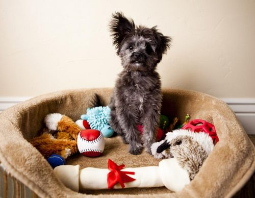 What can I put in the dog's house to keep the dog warm? -heated dog houses