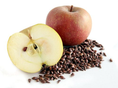 Apple seeds and fruit pits