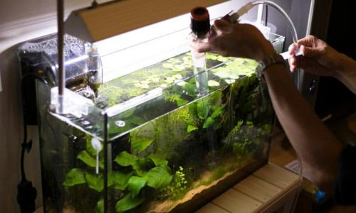 Add water and the substrate