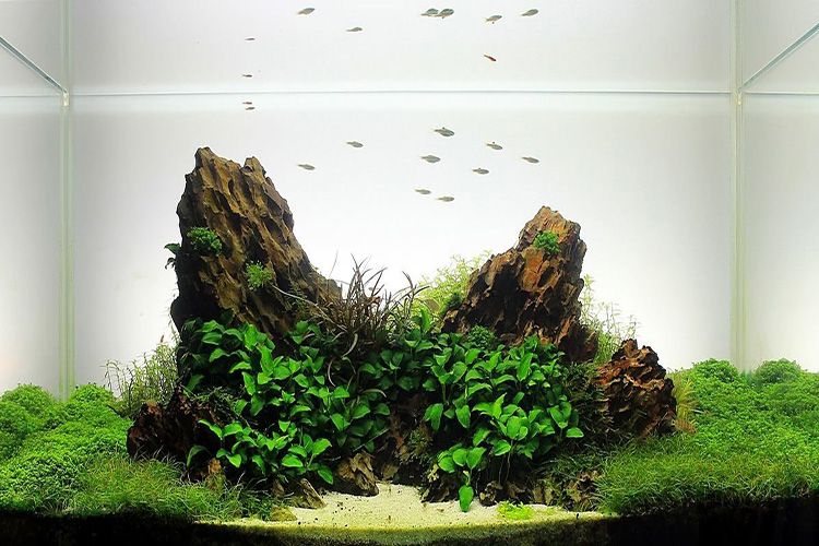 Dragon stone aquarium