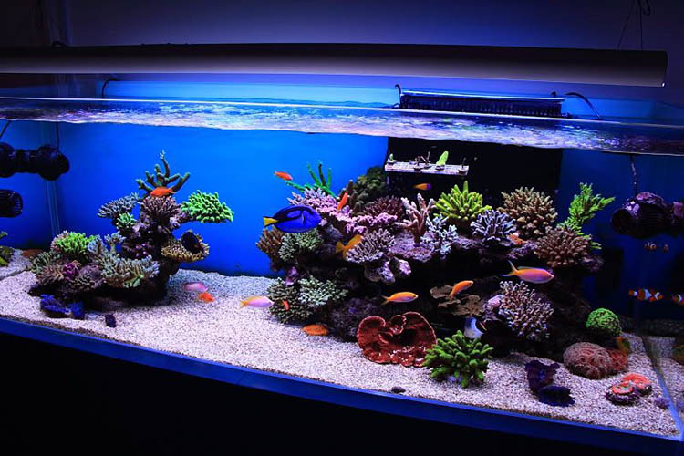 How to Set Salt Water Aquarium