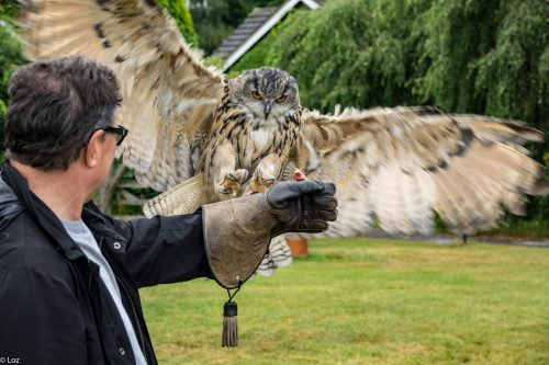 Owl requires a permit