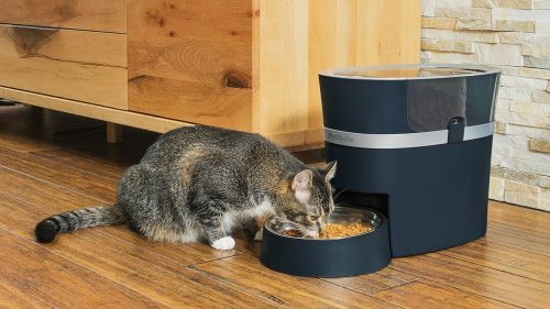 How to set up an automatic pet feeder?? | smart pet feeders
