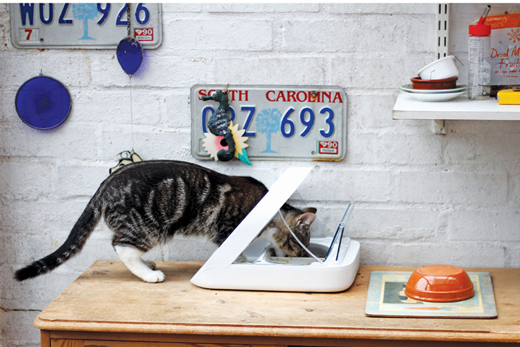 microchip cat feeder