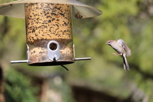 How to Protect Birdhouses from Predators?