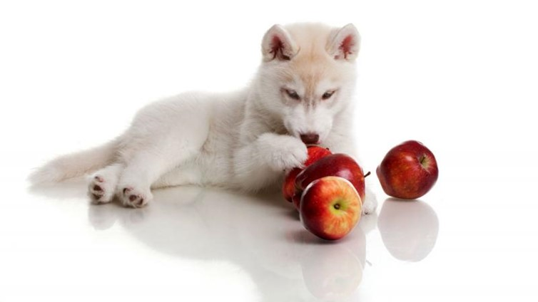 Fruits That Dogs Can Eat- Apples