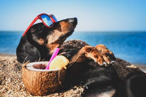 Fruits That Dogs Can Eat- Coconuts