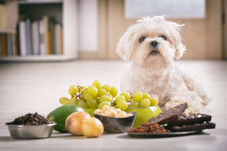 Toxic Foods For Dog