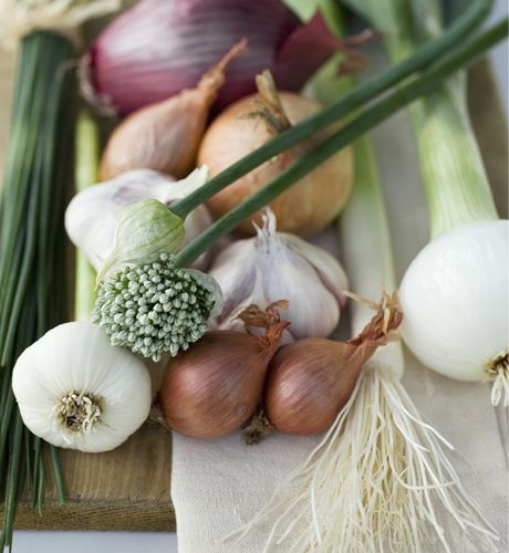 Onions, Garlics, Leeks and Chives