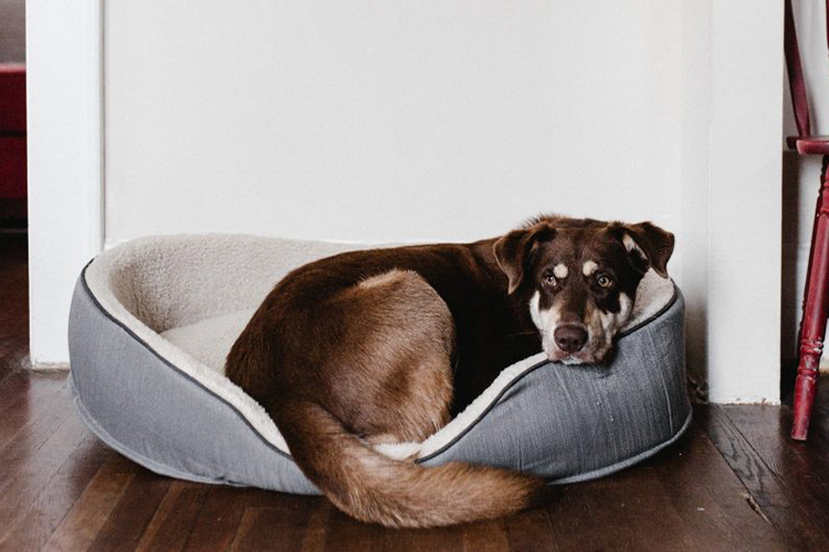 durable dog beds