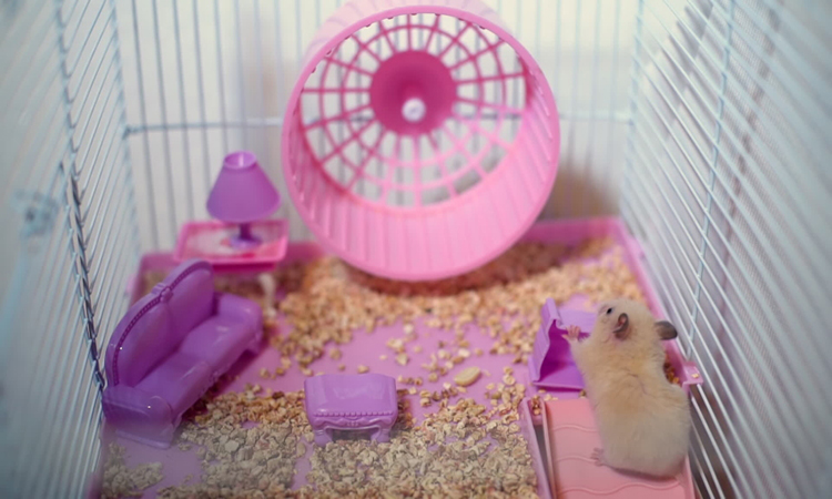 Top 10 Best Syrian Hamster Toy In 2020