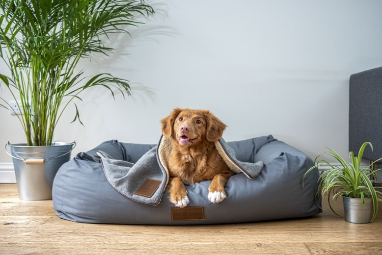 canvas dog bed