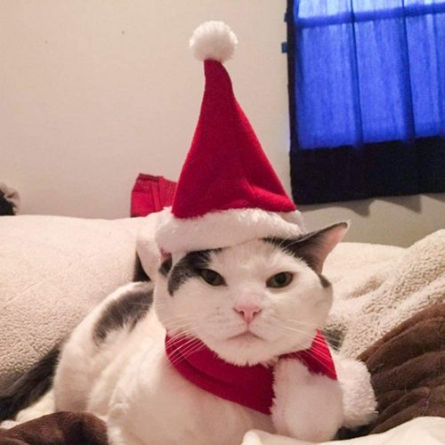 3.Namsan Cat Christmas Outfit Adjustable