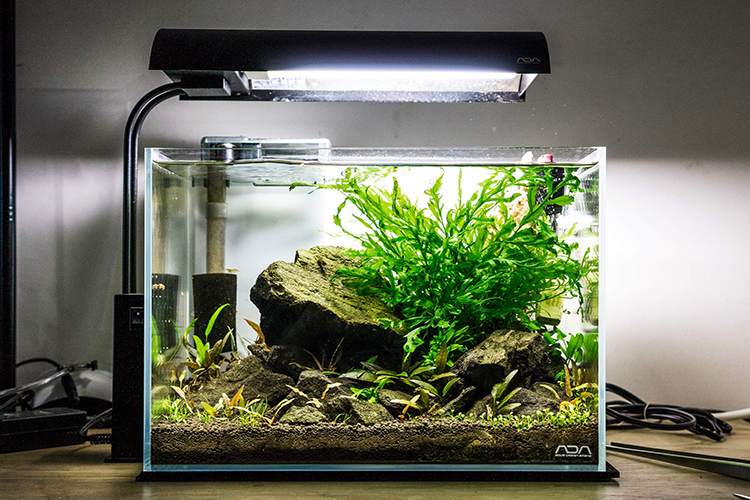 aquascape tank