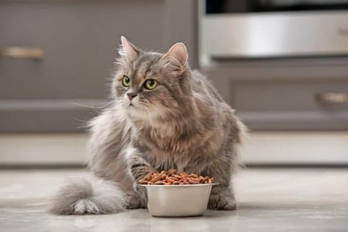 How to Stop Your Cat from Pawing the Floor After Eating?