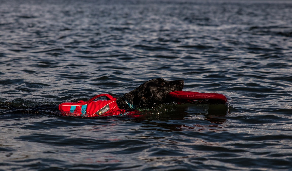 Do Dogs Need Life Vests to Go Swimming?