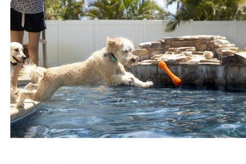 Is Chlorine Bad for Dogs?