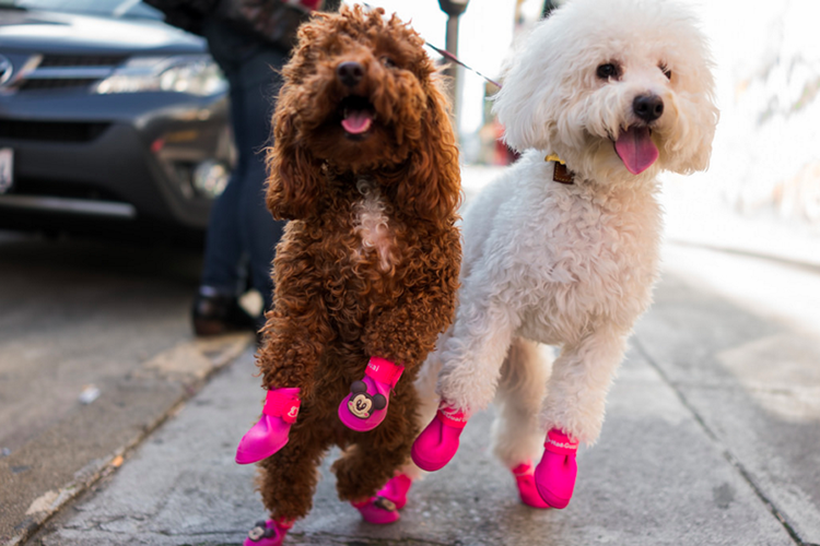 Dog Booties for Summer