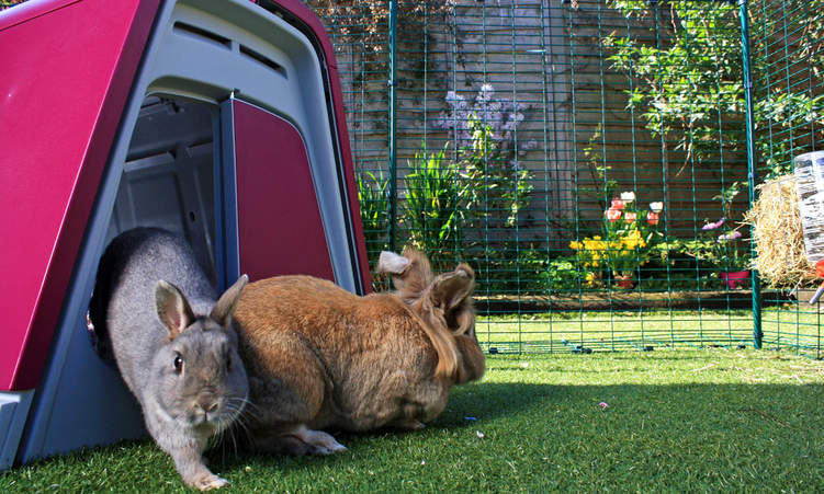 Outdoor Rabbit Cages