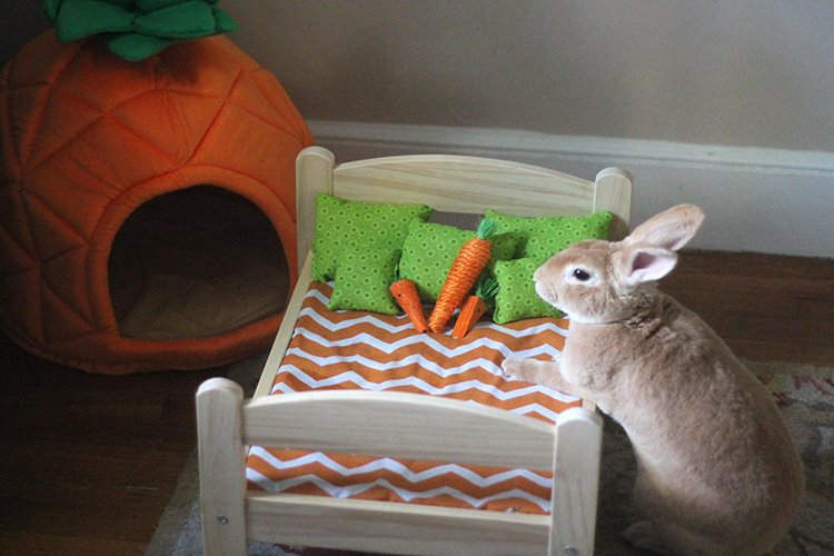 bunny beds