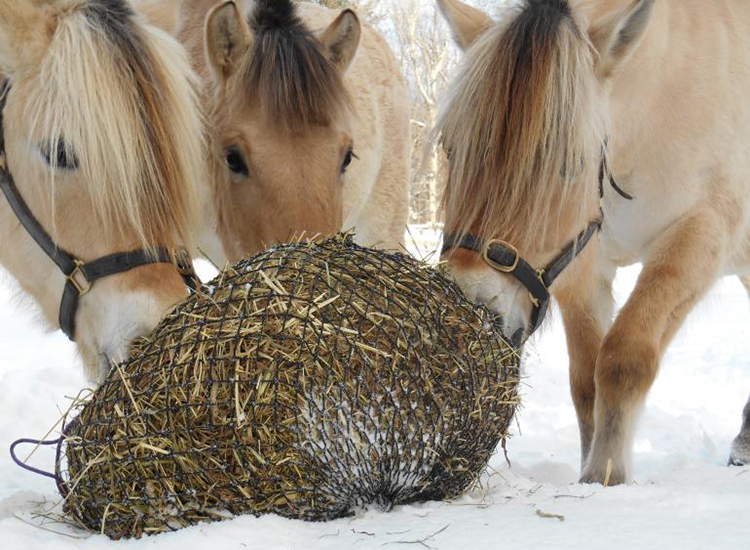 Hay feeder for horse