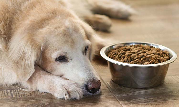 Low Protein Diet For Dogs