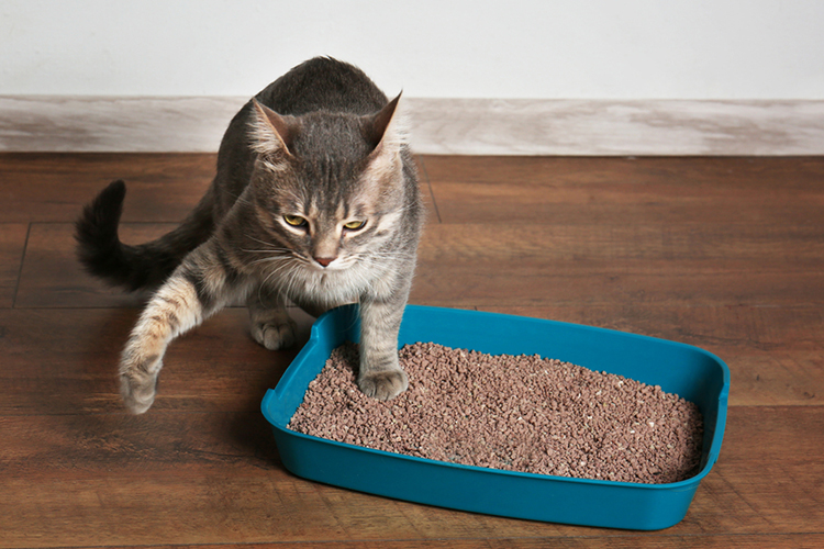 Best Wood Pellet Cat Litters In 2020 Thepetmaster