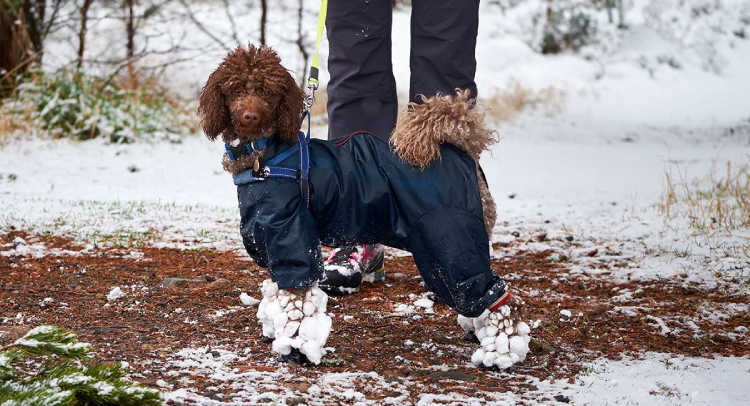 Dog Shoes for Hiking