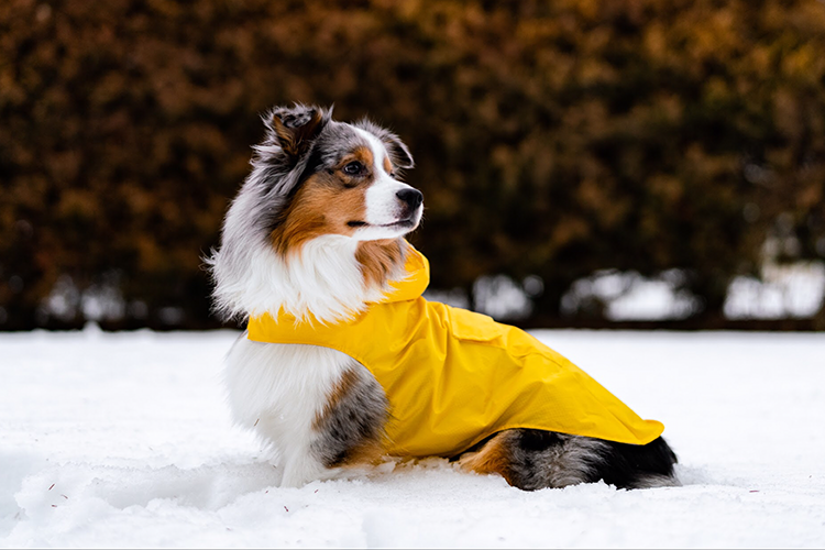 Cool Coats for Dogs