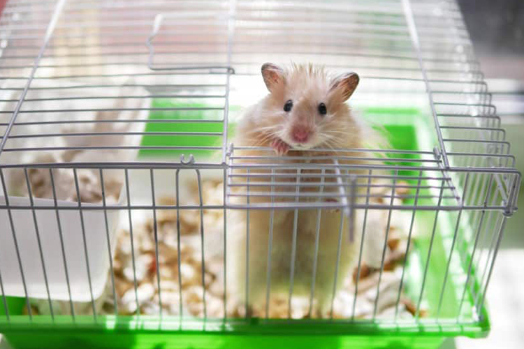 Top 10 Best Hamster Cage In 2020 Thepetmaster