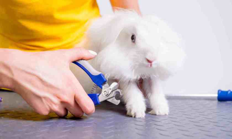rabbit nail clippers