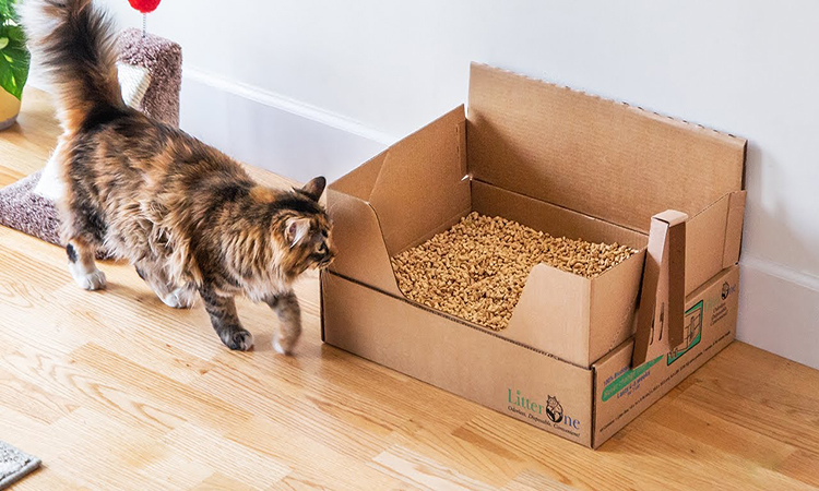 Disposable Cat Litter Box