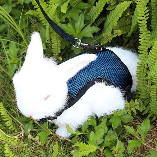 Pettom Bunny Rabbit Harness with Stretchy Leash | Rabbit Leashes