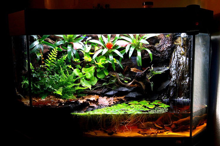 Top 10 Best Snake Terrarium In 2021