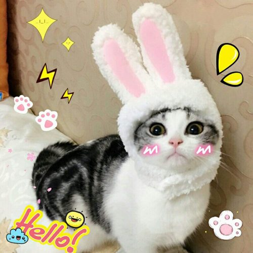 BWOGUE Cute Costume Bunny Rabbit Hat with Ears| Small Animal Costume