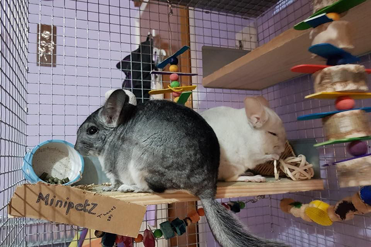 Chew Toy For Chinchilla