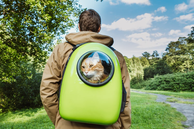 Backpack Pet Carriers For Cats