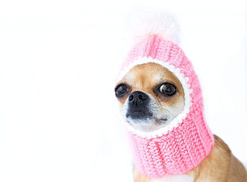 Pink Dog Hat Cozy Crochet Dog Hat | Winter hats for dogs