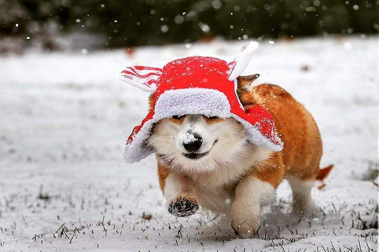 Winter hats for dogs